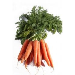 botte de carottes nouvelles bio