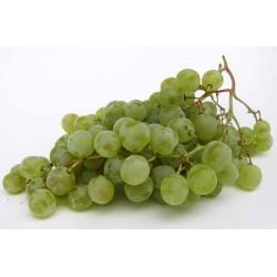 Raisins blancs bio Centenial sans pépins 500 g