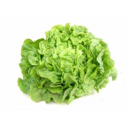 Salade verte bio la pièce
