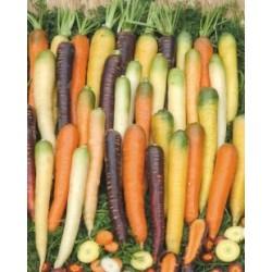 Recette de Salade chaude de blettes et carottes