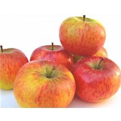Pommes Gala en conversion bio 1 kg