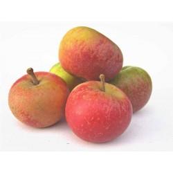 Pommes Cox's orange déclassées 1 kg