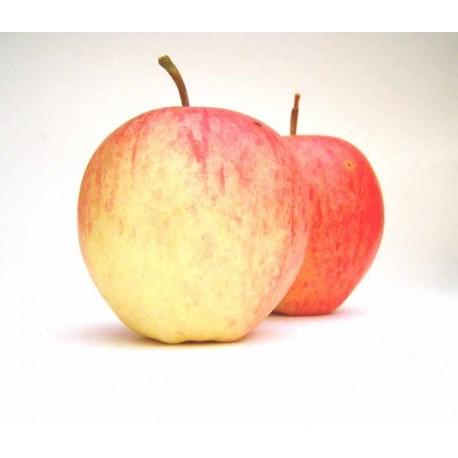 Pommes Pinova déclassées 1 kg
