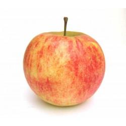 Pommes Elstar 500 g