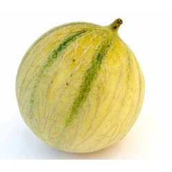 Melon Charentais bio la pièce