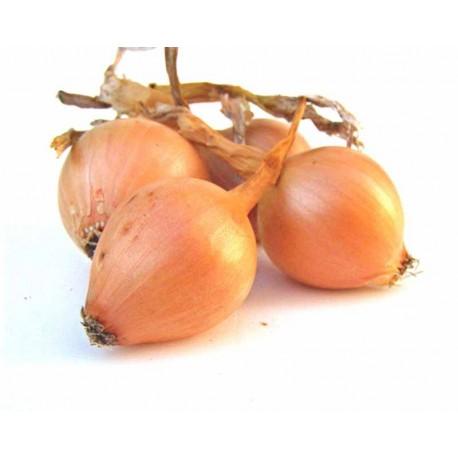 Oignons 500 g