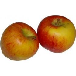 Pommes crisp s Pink 1 kg en conversion bio
