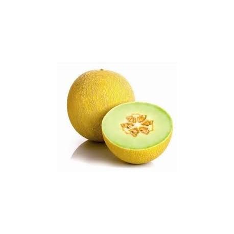 Melon Galia bio la piéce gros calibre