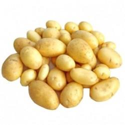 Pommes de terre Charlotte bio 1 kg