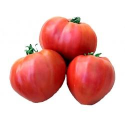 Tomate Coeur de boeuf véritable bio 1 kg