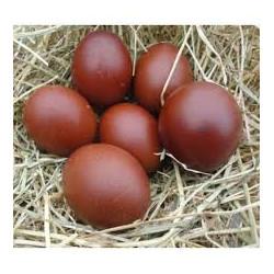 œufs bio de Marans x 6 Ferme des Cotis