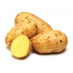 Pommes de terre Nicola bio 1kg