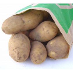 Pommes de terre Agatha bio 1 kg
