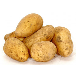 pomme de terre Nouvelle Margod bio 1 kg