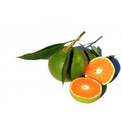 Mandarine Satsuma bio 1 kg